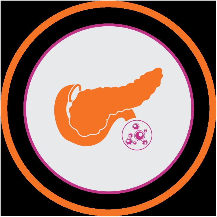 Pancreas Transplant Transplant Australia